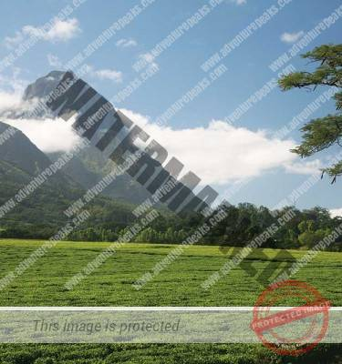 Mount Mulanje Trek