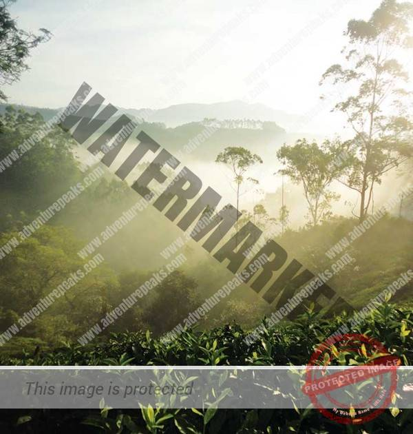South India - The Western Ghats