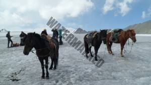 10. Horses were used up to ABC below Mt Khuiten